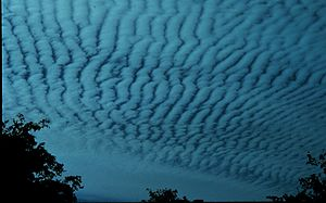 300px-Altocumulus_clouds2_-_NOAA